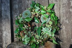 "12"" Moss-based Living Wreath with FREE delivery"