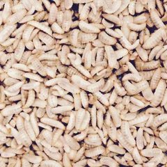 125 COUNT BSFL CALCI GRUBS MEDIUM SIZE