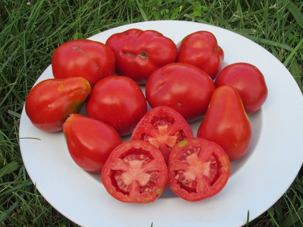 All Heirloom Vegetable Seeds and Plants. Choose from our wide selection of heirloom vegetable seeds and plants and enjoy the distinctive, old-fashioned taste of these classic favorites.