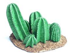 Cacti Base