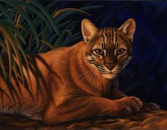 "Asian golden cat 14 x 18"" Signed and Numbered giclée on canvas"