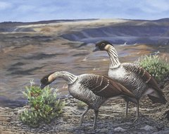"""Nene (Hawaiian geese) 24 x 30"""" Signed and Numbered giclée on canvas"""