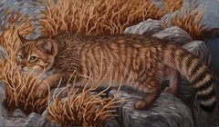 "Chinese mountain cat 14 x 24"" Signed and Numbered giclée on canvas"