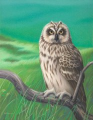 """Pueo (Hawaiian short-eared owl) 16 x 12"""" Signed and Numbered giclée on paper"""