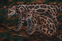 """Margays 20 x 30"""" Signed and Numbered giclée on canvas"""