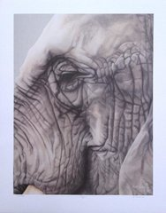 "CLOSEOUT SALE! African elephant 19 x15"" Signed and Numbered fine art print on paper"