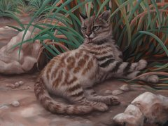 Pampas cat Original oil painting on canvas 18 x 24""