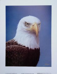 "CLOSEOUT SALE! Bald eagle 16 x 12"" Signed fine art print on paper"