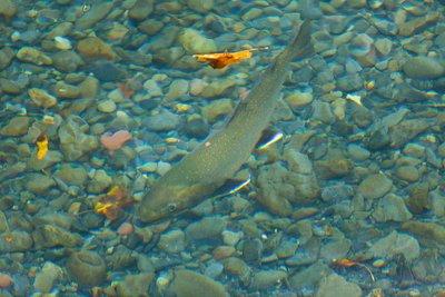 ray2fish.com