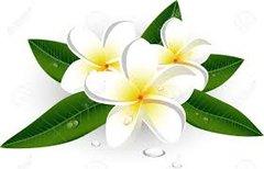 Plumeria Hydrating Cream/Oil