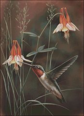 Hummingbird and Columbine