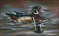 Glide By Wood Duck