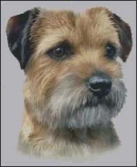 Border Terrier NB