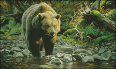 Soda Butte Grizzly