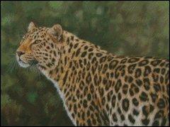 Leopard - DS