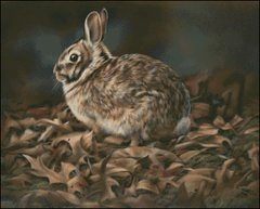 Autumn Cottontail