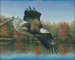 Wetlands Eagle