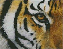 Eye of the Tiger - LB