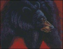 The Bear Glance