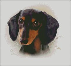 Black & Tan Dachshund