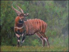 Bongo Antelope