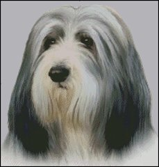 Bearded Collie NB