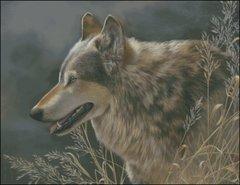 Grey Wolf Study