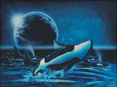 Orcas at Night