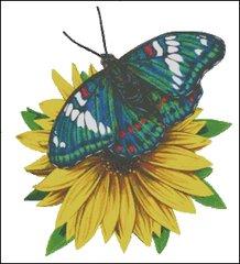 Gandy Baron Butterfly