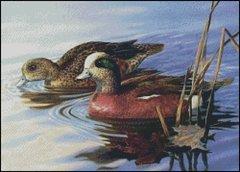Widgeon Duck Pair