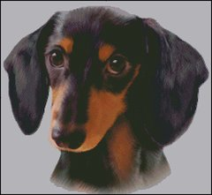 Black & Tan Dachshund NB