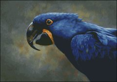 Blue Hyacinth Macaw