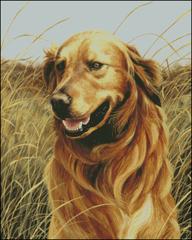 Field Companion Golden Retriever