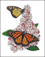 Monarch Butterfly - MB