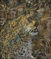 Leopard - BM