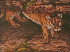All Present Cougar