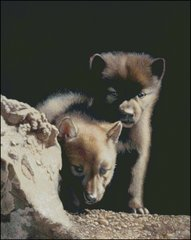 Curious Pair