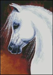 Arabian Grey Horse
