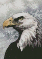 Bald Eagle -MW