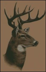 Whitetail Buck Deer Profile