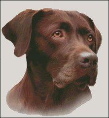 Chocolate Labrador NB