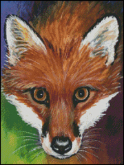 Red Fox - AM