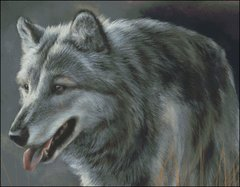 Gray Wolf - RL