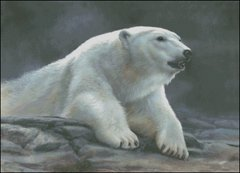 Polar Ambiance