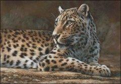 Leopard - RL