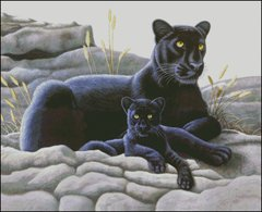 Black Panther and Cub