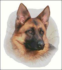 German Shepherd - HR