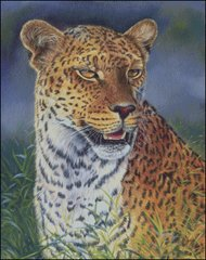 Leopard - CC