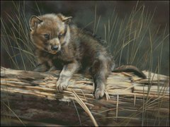 Bump on a Log (Wolf Pup)