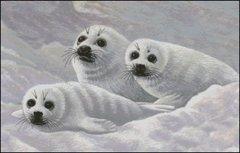 Harp Seal Pups